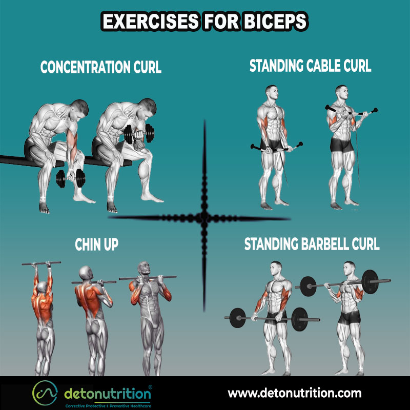 Best Exercises for Bigger Arms